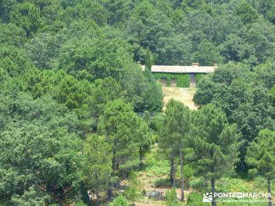 Pinares de la Angostura en Piedralaves;rutas trekking viajes naturaleza